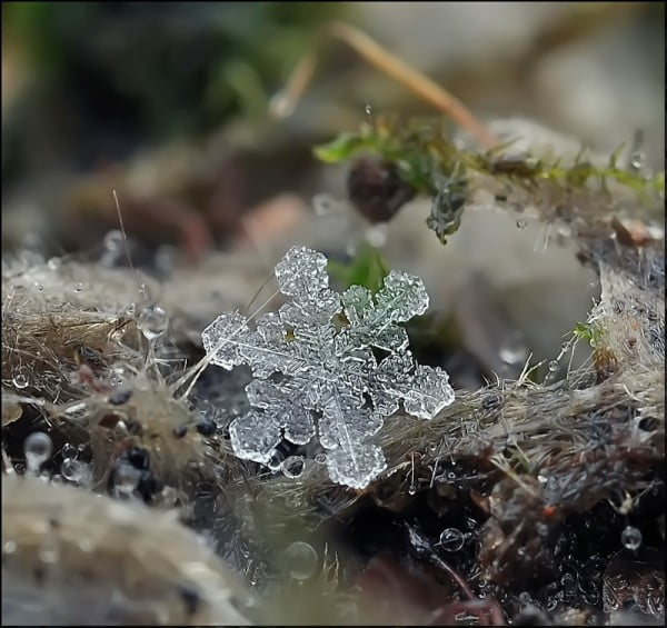 The delicate world of a single snow flake