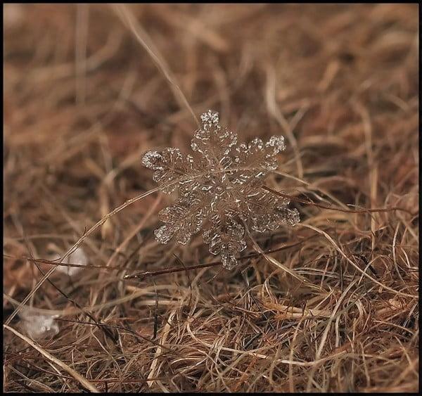 Delicate Spice macro photography