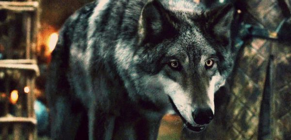 dire wolf in the forest